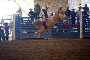 Bull Rider (Photo by Ed Miller)