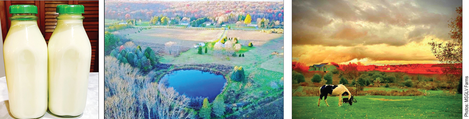 (L) Milk from Muhammad's Study Group Lehigh Valley Farms (C) A pond situated on Muhammad's Study Group Lehigh Valley (MSGLV) Farms located Pennsylvania., (R) Cow grazing on farmland of Muhammad's Study Group Lehigh Valley (MSGLV) Farms.